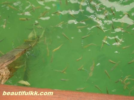 fish-below-the-jetty.JPG