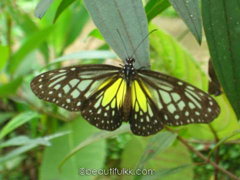 Kipandi Butterfly Park | beautifulKK.com