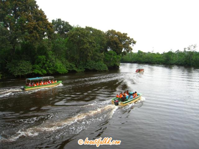Boats on the Klias River in Search of Primates