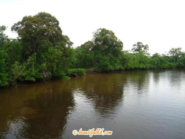 Swampy Areas Along the Klias River
