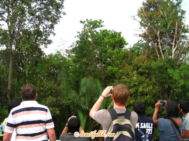 Tourists Trying to Get a Good Picture of the Proboscis Monkey