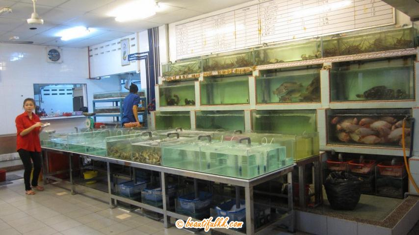 Numerous Cascading Aquariums With Live Fishes