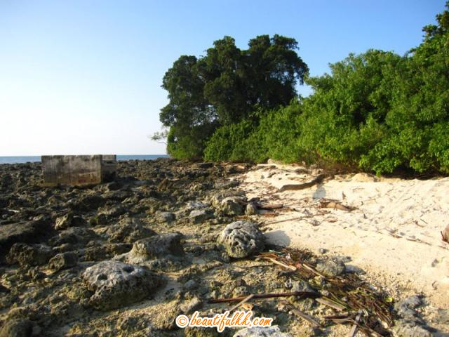 The Rocky Surface On The Northern Part Of Selingan Island
