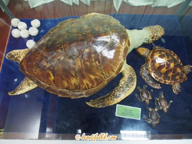 Taxidermic Turtles In The Exhibition Room (Donald Monjohi)